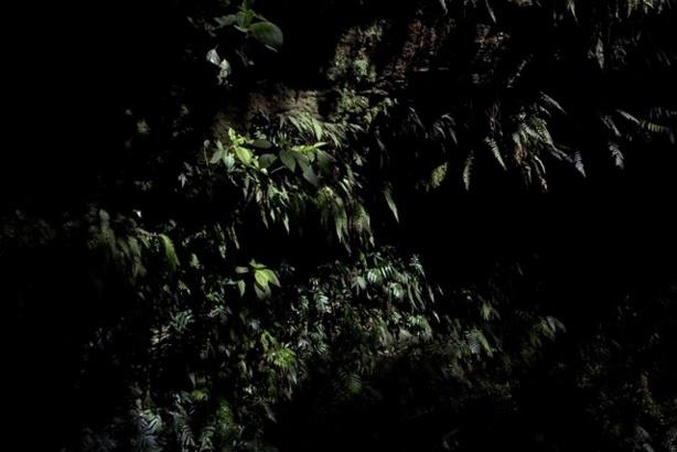 (c) SV. Caravaggio's Moss B (2011)