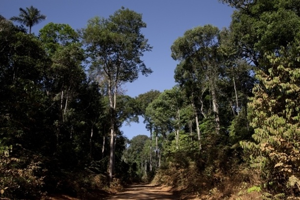 (c) SV. Roads of Amazonia 5 (2011)